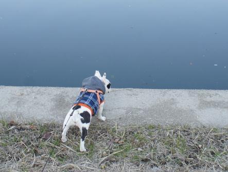 川を覗いて歩くツアー