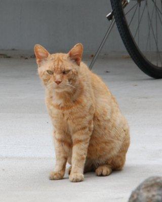 cat16-1.jpg