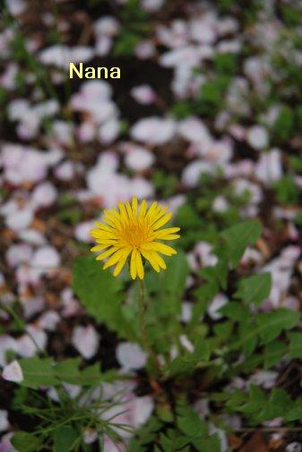 flower16-10.jpg