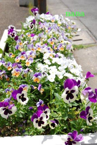 flower16-11.jpg