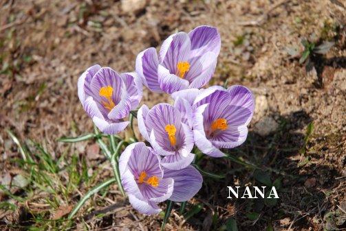 flower16-4.jpg