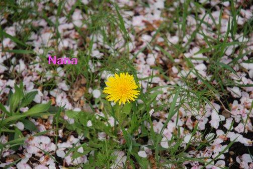 flower16-6.jpg