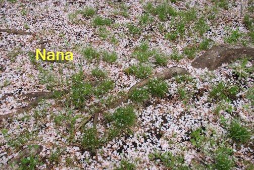 flower16-7.jpg