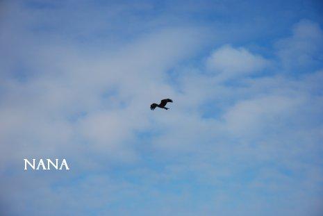 sky21-7.jpg