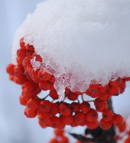 winter21-2.jpg