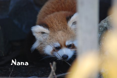 zoo17-11.jpg