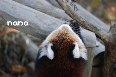 zoo18-33.jpg