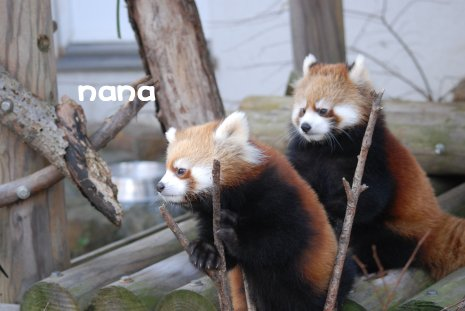 zoo18-38.jpg