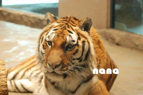zoo18-60.jpg