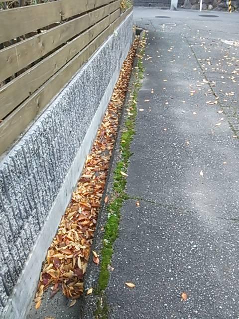 落ち葉まず溝へ