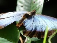CostaricaCahuita16