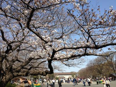桜_convert_20130321110941