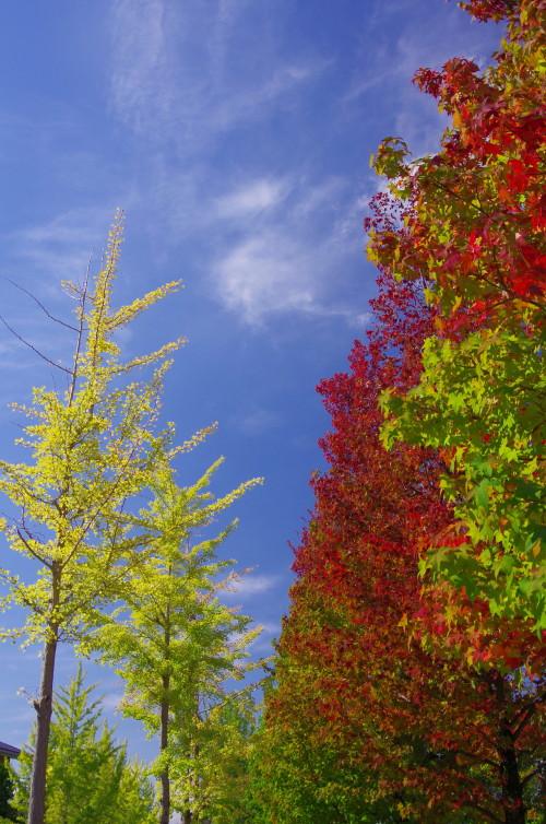 天理 街路樹3