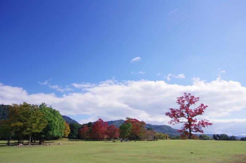 奈良公園 ナンキンハゼ 飛火野1