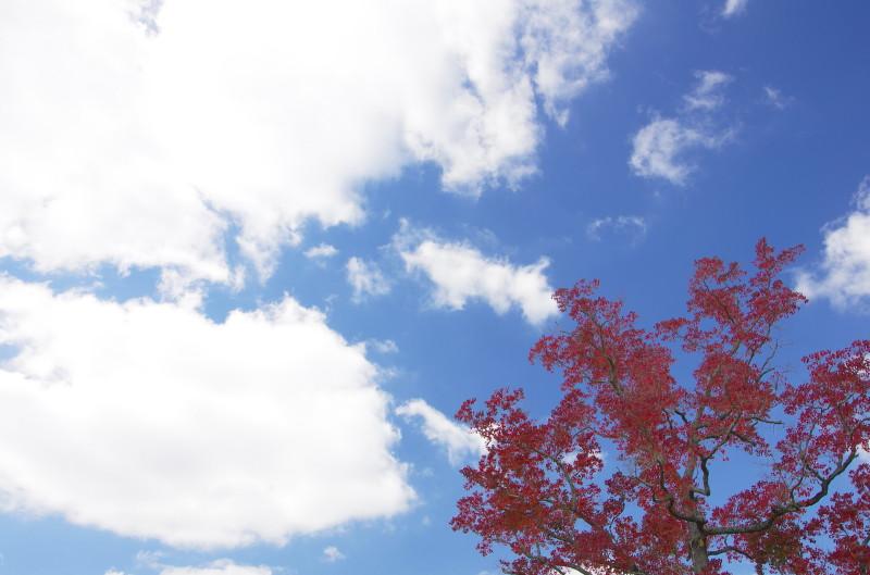 奈良公園 ナンキンハゼと空