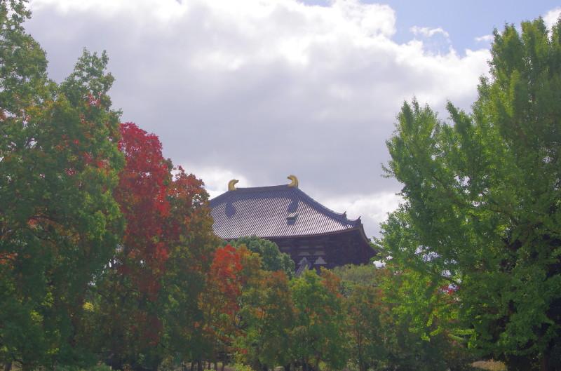 奈良公園 ナンキンハゼ 大仏殿