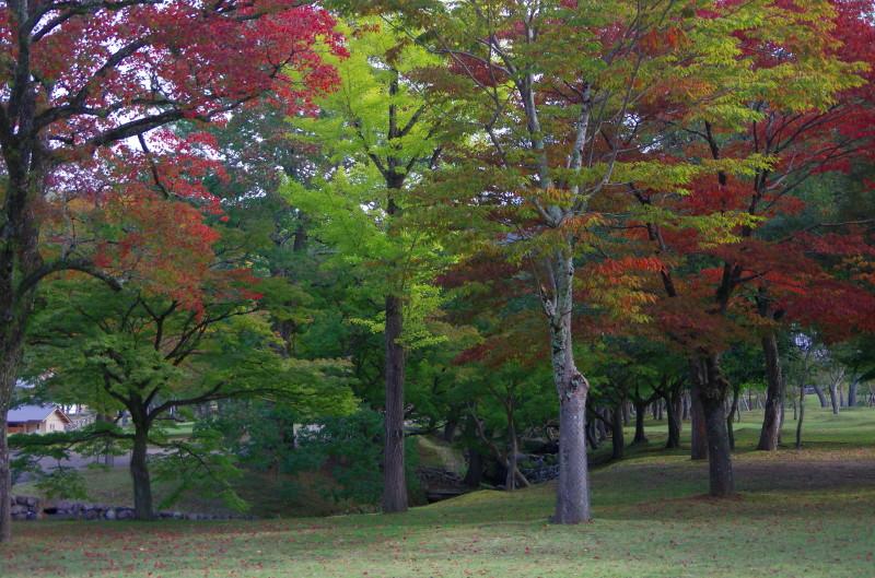 奈良公園 ナンキンハゼ
