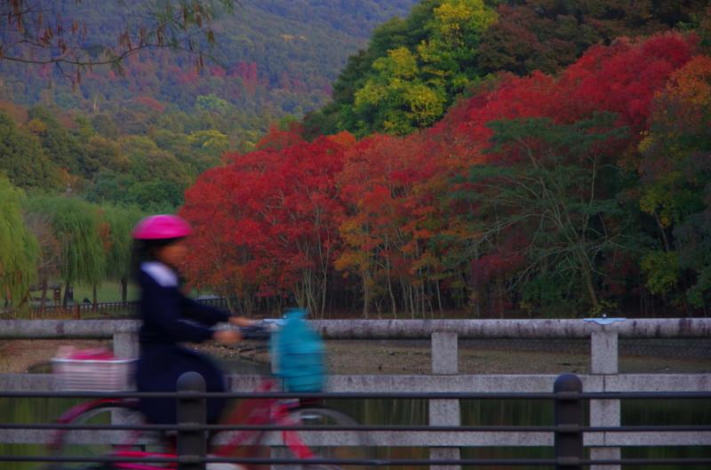 奈良公園 鷺池 ナンキンハゼ 自転車
