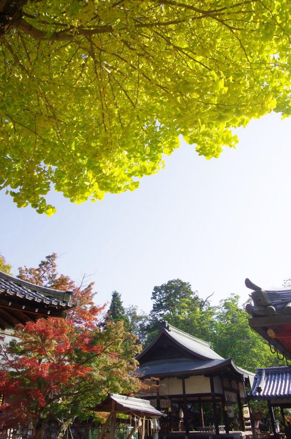 奈良公園 銀杏 手向山神社