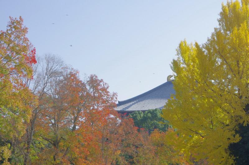 奈良公園 銀杏 東塔跡