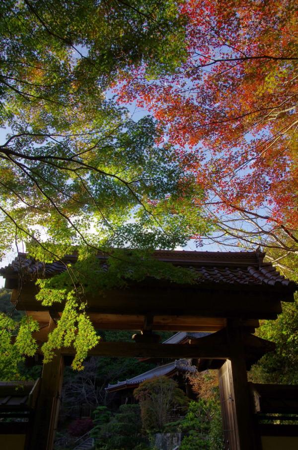 弘仁寺 山門の紅葉