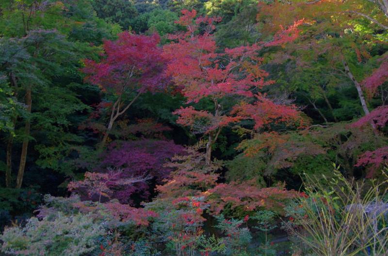 正暦寺 本堂への紅葉