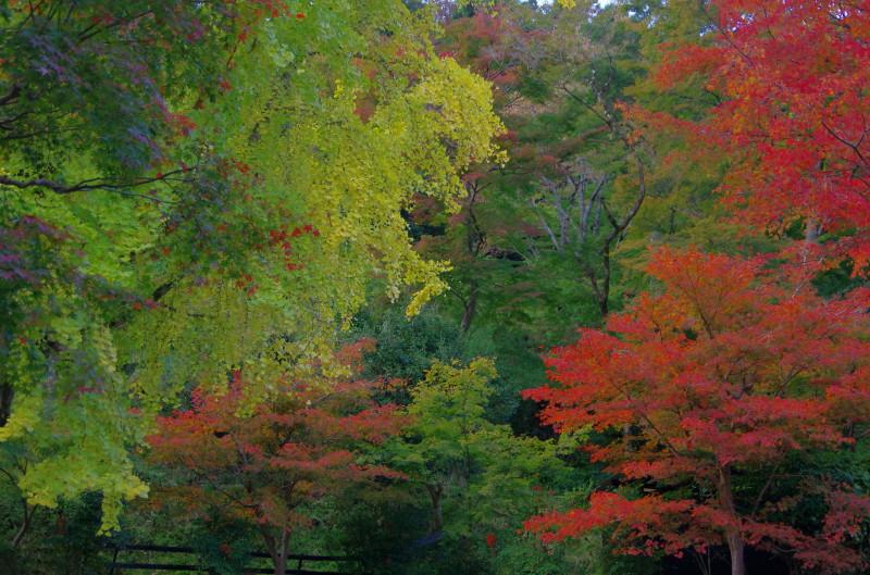 正暦寺 福寿殿前の紅葉