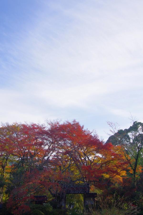 大願寺 紅葉 山門と空