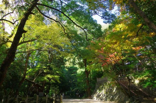 笛吹神社 紅葉