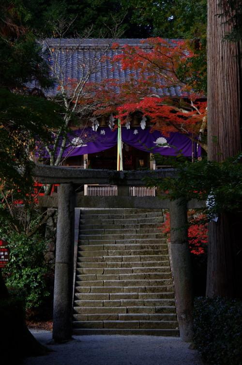 高鴨神社 紅葉
