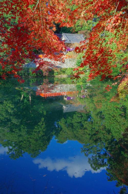 高鴨神社 紅葉 池と社0