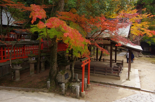 奈良公園 手向山神社 紅葉