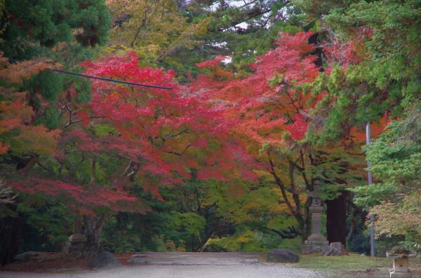奈良公園 手向山神社参道 紅葉