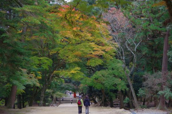 奈良公園 手向山神社参道 紅葉1