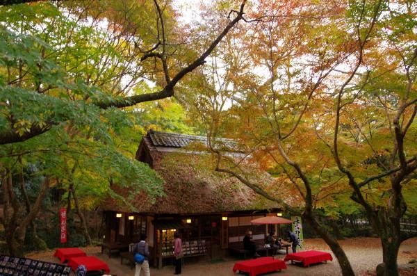 奈良公園 水谷茶屋 紅葉