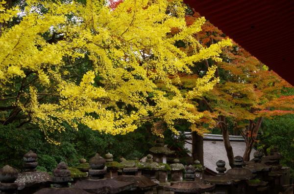 奈良公園 春日大社 紅葉