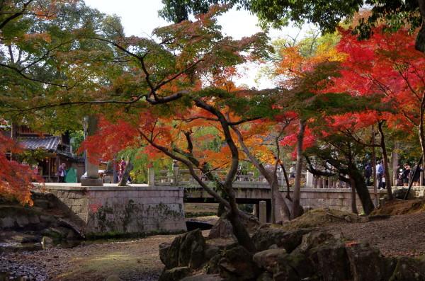 奈良公園 吉城川 椛紅葉1
