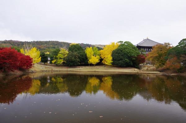 奈良公園 大仏池 紅葉