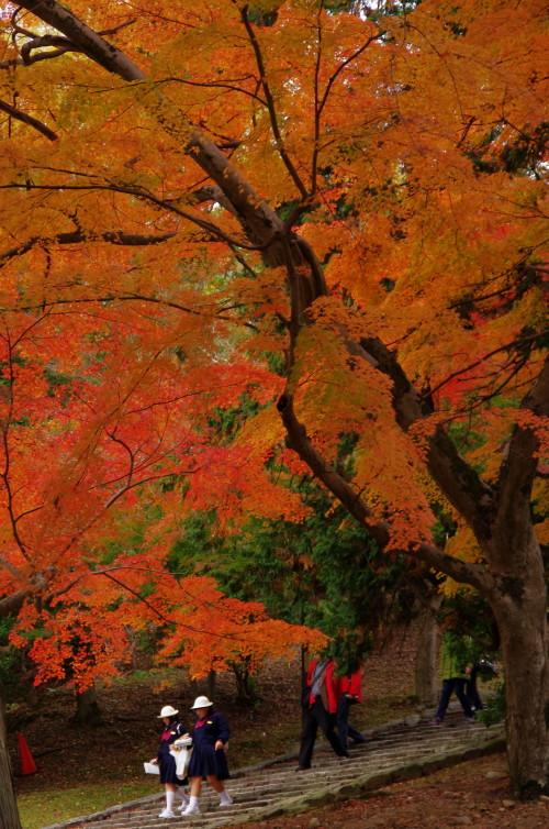 奈良公園 東大寺 猫段 紅葉