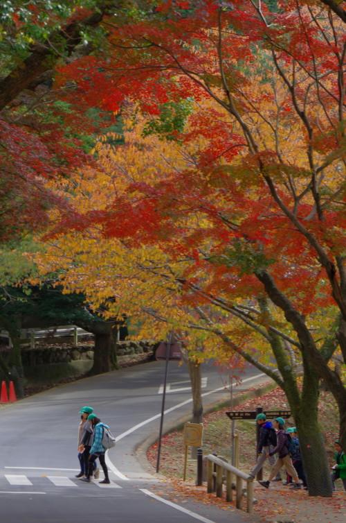 奈良公園 若草山道 紅葉