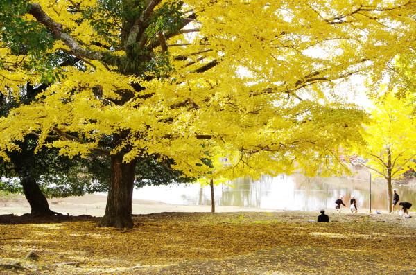 奈良公園 大仏池 紅葉00_1