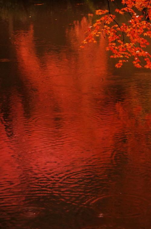 石上神宮 紅葉1