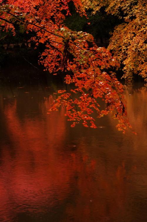 石上神宮 紅葉