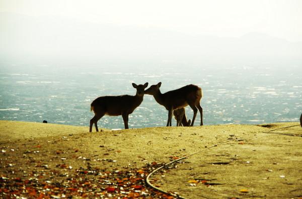奈良公園 紅葉 若草山山頂