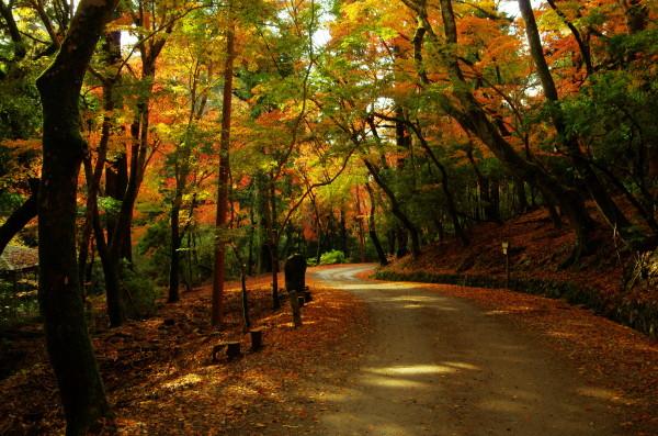 奈良公園 紅葉 若草山1