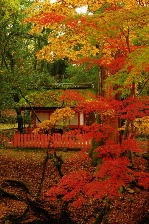 奈良公園 紅葉 水谷茶屋1