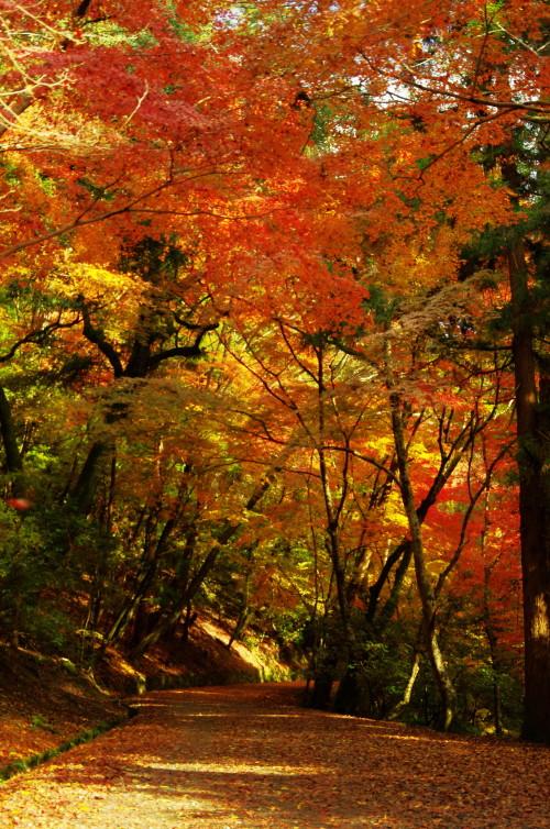 奈良公園 紅葉 若草山3