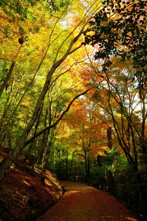 奈良公園 紅葉 若草山4