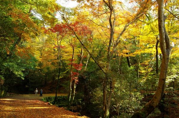 奈良公園 紅葉 若草山5