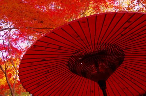 奈良公園 紅葉 水谷茶屋 傘